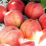 桃の果実酢が人気♪作り方や効能はこちら